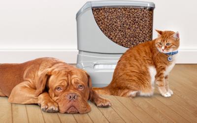 Pet Obesity Epidemic